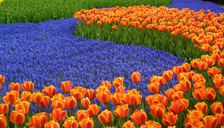 Skip the Line Tickets Keukenhof / Flower Garden in The Netherlands